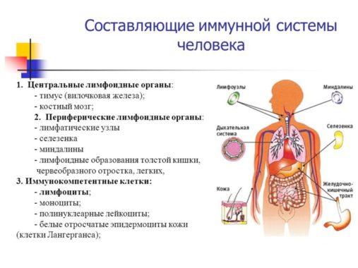 картинка иммунитета состав